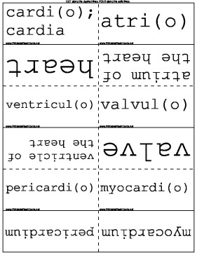 Medical Prefixes and Suffixes template